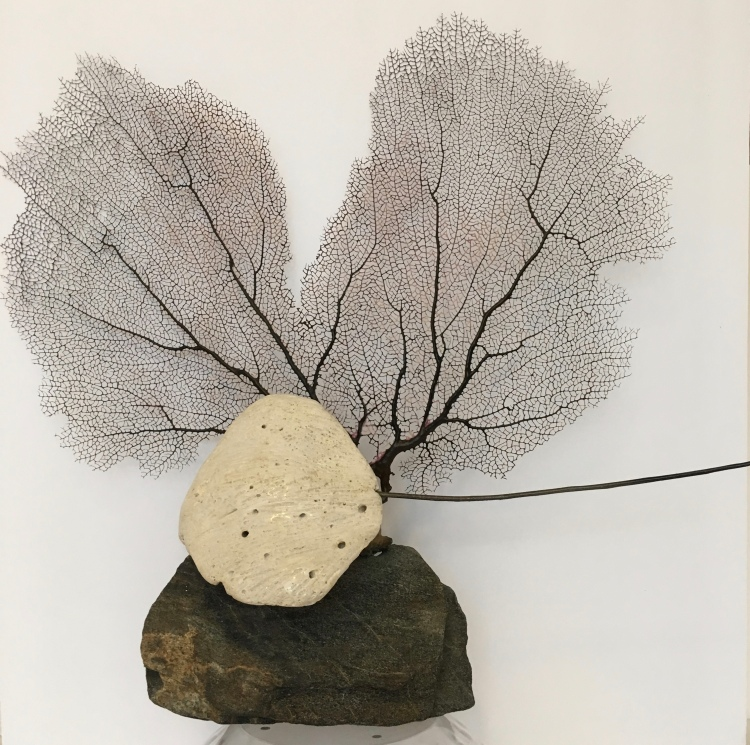 Coral stingray