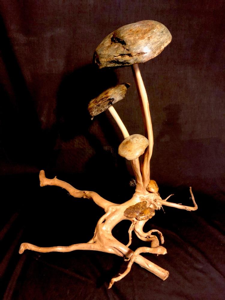 Mushrooms on a root