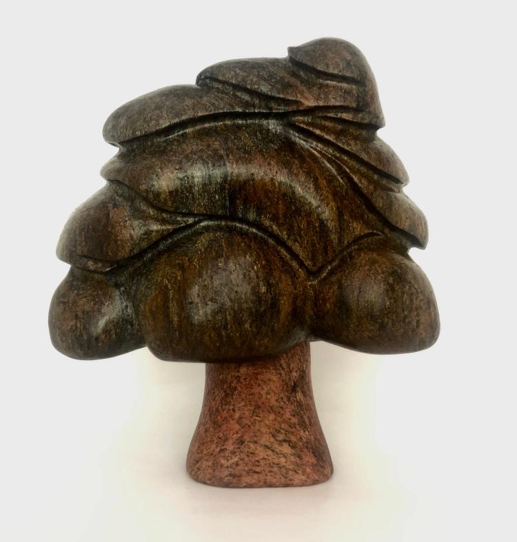 Carolina stone oak tree